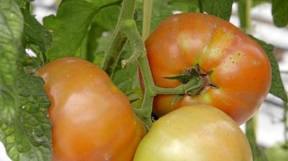 Euskobaratza.com, nueva web con información útil para el cultivo de tu huerto