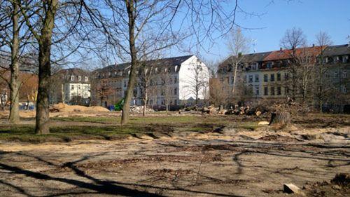 Fehlende Bäume am Alaunplatz.