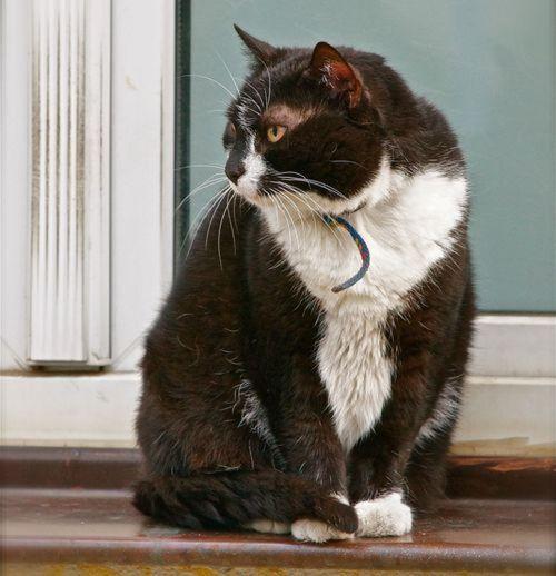Neustadt-Katze festgehalten von Marc McLovin.