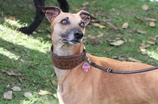 Hunde Welpen Adoptieren Kaufen Flohmarktms Kleinanzeigen