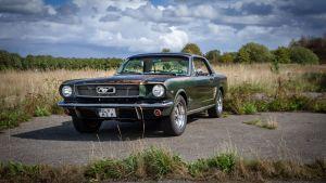 Mustang auf der Weide