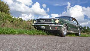 Mustang auf der Wiese