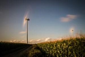 Windräder im Maisfeld