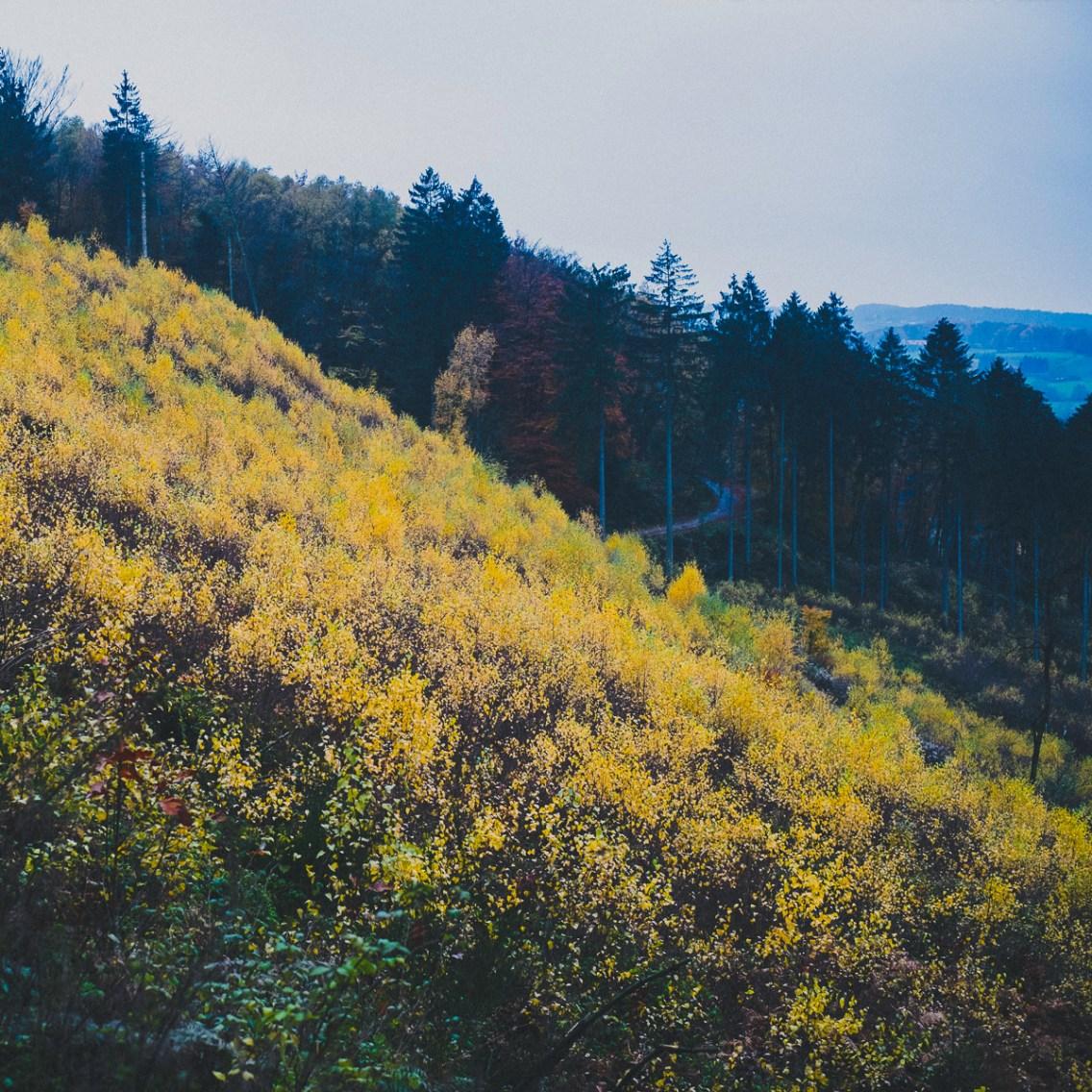 Waldspaziergang-013