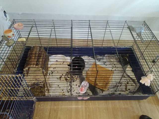 Bild från anmälan om missförhållanden. Urintäckt, blöt filt i botten av kaninburen.