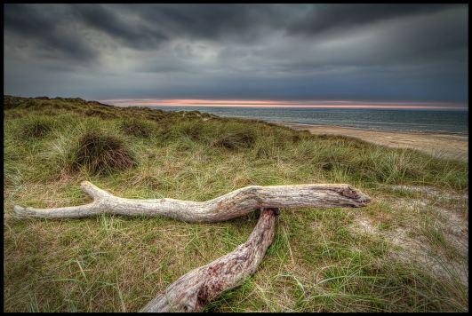 tornby-strand-wood