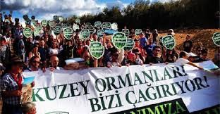 Kanal İstanbul ve Kuzey Ormanları'nın yaban domuzları (1/3)