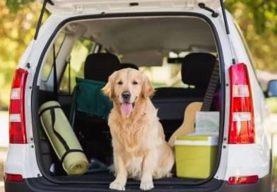 Evcil Hayvanlarla Yolculuk Hakkında Bilmeniz Gerekenler