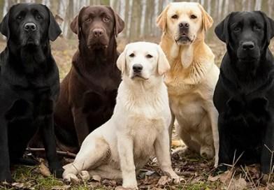 Uzun Yaşayan Köpek Irkları