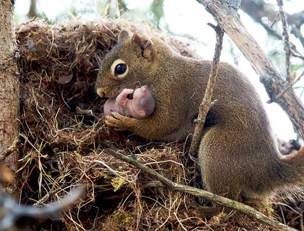 Sincap ve yavrusu / pensivesquirrel