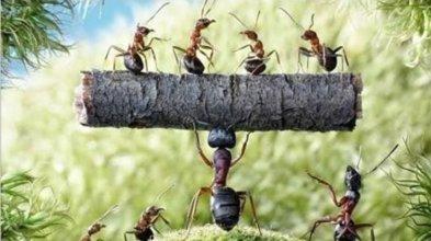 karıncalar-ve-arkeologlar-bilim-dili-2-