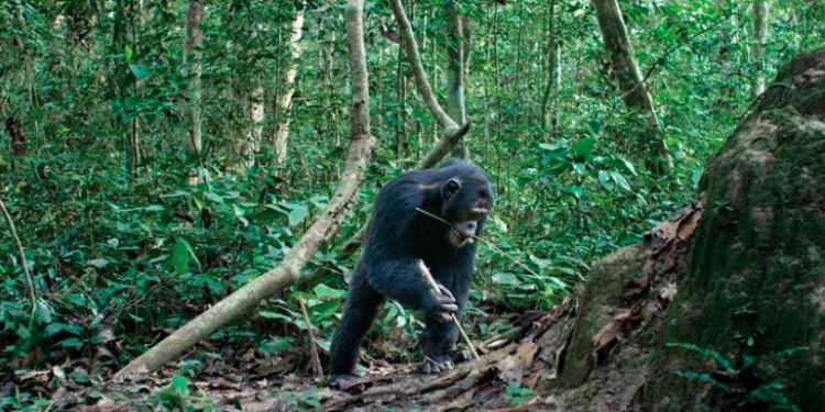 Hayvanların Ne Kadar Zeki Olduklarını Nasıl Anlayabiliriz?