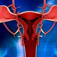 Kadın Orgazmının Evrimsel Kökeni