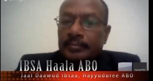 daawud ibsaa 201311