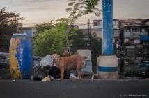 IMG_9603---copyright-201301__dog__Manila__Philippines__river__travel