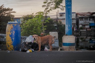 IMG_9603---copyright-201301__dog__Manila__Philippines__river__travel