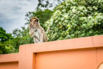 Monkey Time in Brunei