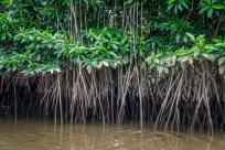Brunei River Plants