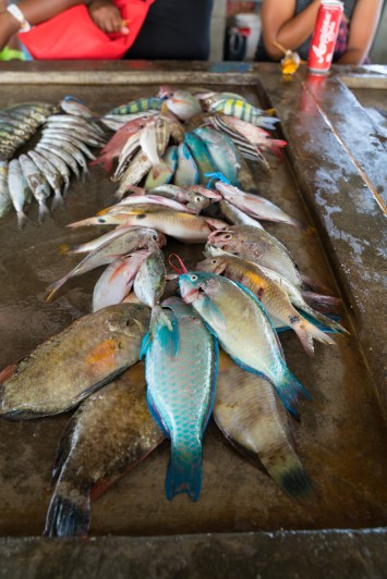 colorful-fish-kopi-port-moresby-papua-new-guinea