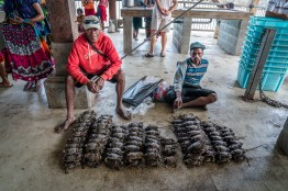 selling-crabs-kopi-port-moresby-papua-new-guinea