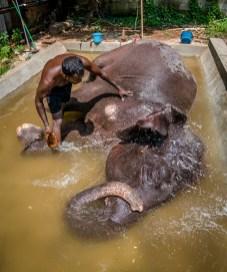 splashing-water-temple-elephant-colombo-sri-lanka