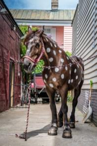 horse-white-dots