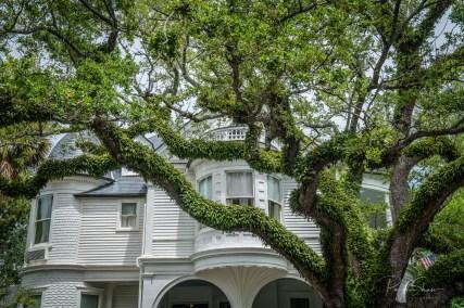live-oak-historic-white-house