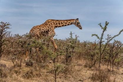 serengeti-paige-shaw-September 19, 2021-28