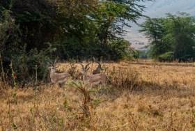 ngorongoro-crater-paige-shaw-September 19, 2021-3