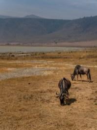 ngorongoro-crater-paige-shaw-September 19, 2021-9