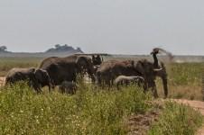 serengeti-paige-shaw-September 20, 2021-11