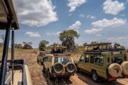 serengeti-paige-shaw-September 20, 2021-14