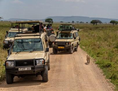 serengeti-paige-shaw-September 20, 2021-21