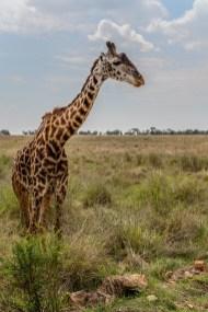 serengeti-paige-shaw-September 20, 2021-25