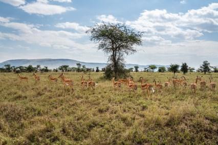 serengeti-paige-shaw-September 20, 2021-28