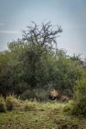serengeti-paige-shaw-September 20, 2021-30