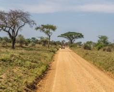serengeti-paige-shaw-September 20, 2021-6