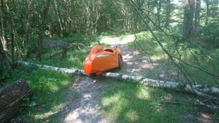 Strada over træ