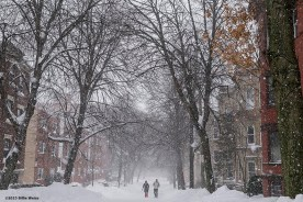"""""""A street is shown during snow storm Juno in Brookline, Massachusetts Tuesday, January 27, 2015."""""""