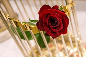 """""""A red rose is shown inside the 2013 Boston Red Sox World Series trophy during a Boston Red Sox Valentine's Day caravan to retirement and assisted living communities throughout greater Boston Friday, February 13, 2015."""""""