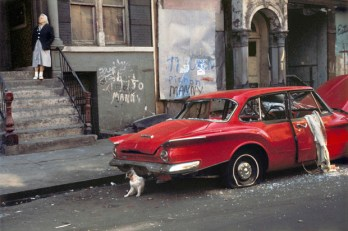 """Helen Levitt, """"Cat next to Red Car, 1973 THIS ISN'T ART????"""