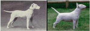 Dog Devolution