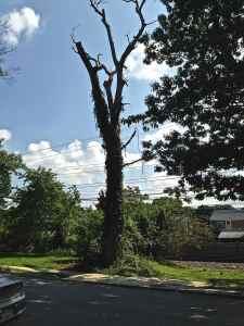 Dangerous Trees Of Springfield Pa SEPTA 1