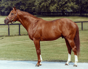 Secretariat Beats American Pharoah -- The Wall Street Journal created a split-screen video of the 1973 Belmont Stakes in which Secretariat won his Triple Crown and the one held last Saturday in which American Pharoah repeated the feat for the first time since 1978.