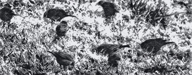 Birds of the hexagon