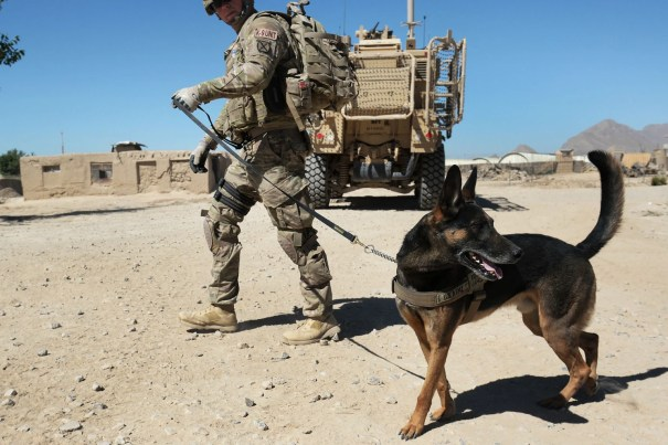 SERVICE DOGS LEFT BEHIND