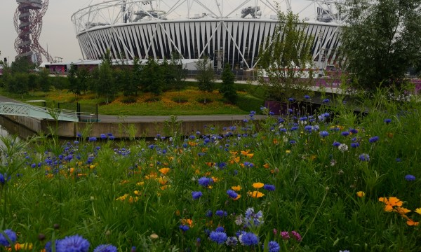 Olympic stadium and wildflowers