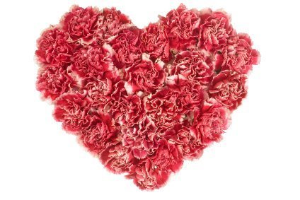 Carnation-for-Mothers-Day