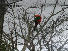 Majestic orange and forest green bird in tree