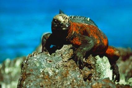 Galápagos Islands, Ecuador, South America